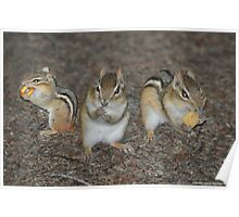 Chipmunks 3 in 1 Poster