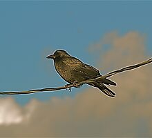 On The Wire by fotobahn