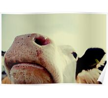 Nosy cow! Poster