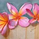 Frangipani's (Plumeria) by the Pool by PhysioDave