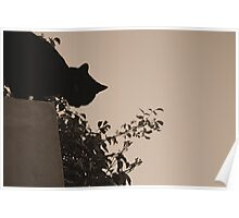 Kitty on the Fence Poster
