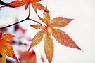 Oak leaf by Larry  Grayam
