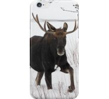 Moose on the Move iPhone Case/Skin