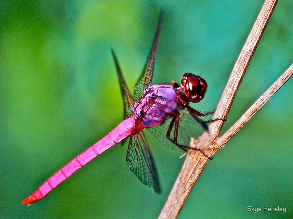 Pretty Boy in Pink by Skye Hensley