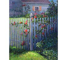 Clematis on a Picket Fence Photographic Print