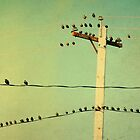 Chatty Birds by gothicolors