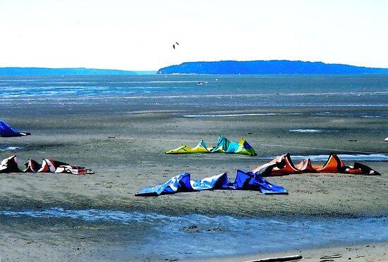 Kites on Jetty Island, near Seattle, Washington by Igor Pozdnyakov