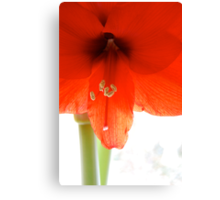 Spring for Christmas Canvas Print
