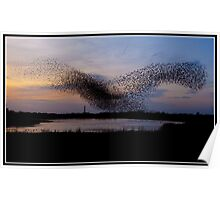 Starlings dancing over Blackpool tower Poster