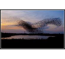 Starlings dancing over Blackpool tower Photographic Print