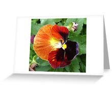 Pretty Pansy Greeting Card