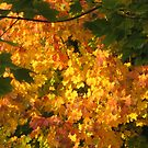 Autumn by Sandy Taylor
