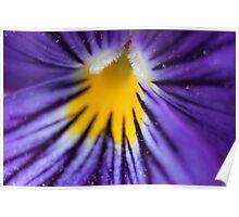 Little Violet in bloom Poster