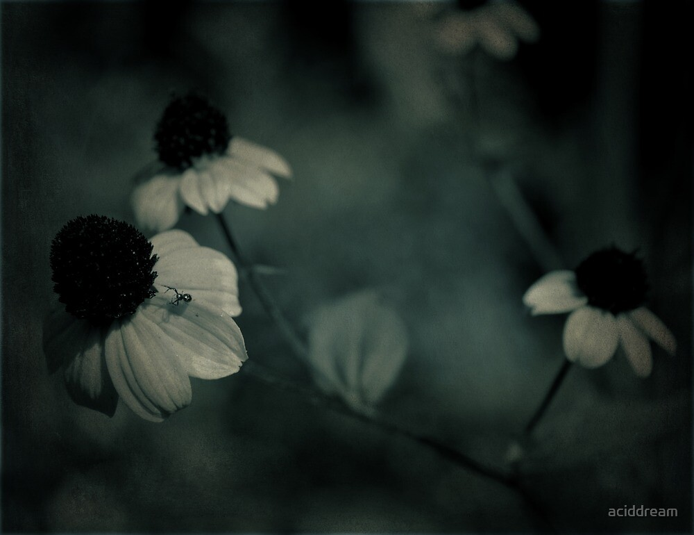 Flowery blues by aciddream