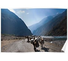 Mule train in valley Poster
