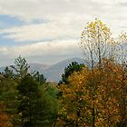 View from the porch  by Tracey Hampton