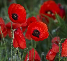 . . . at the going down of the sun and in the morning we will remember them! by outwest photography.co.uk