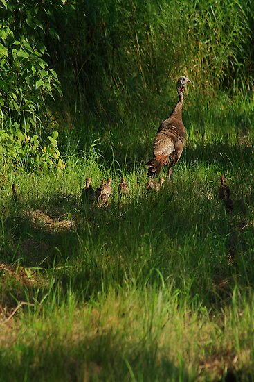 Baby Turkeys with Mom by KatsEye