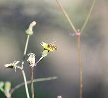 Nectaring Bee by dwntwnbrn