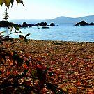 Autumn leaves dance across LakeTahoe sand by Elaine Bawden
