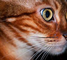 Diva in profile by evilcat