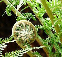 Growing Fern Plant by solena432