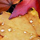 Autumn Rain by bkphoto