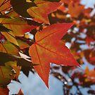 Fall Leaves in Valparaiso by alina98
