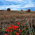 Poppies at harvest time by Phillip Dove