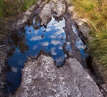 Cloudy Puddle by Shane Viper
