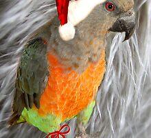 Season's Greetings Parrot by digitalmidge