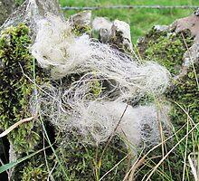 Sheeps wool by Forfarlass