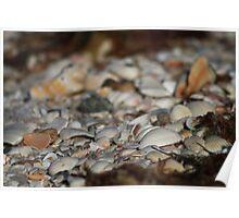 Sea Of Shells Poster