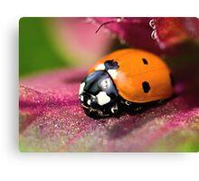 Ladybird - Ladybug - Marienkäfer - Glückskäfer II Canvas Print