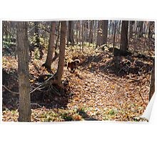 Dry Autumn Creek Bed Poster