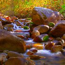 Babbling Brook by CDNPhoto