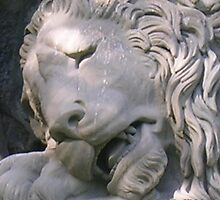 lion crying by sharon wingard