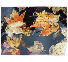 Autumn Moods 13 Poster