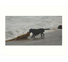 Retreive that seaweed Art Print