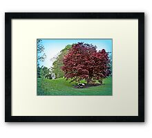 Sketching Under The Red Maple - Grounds for Sculpture Framed Print