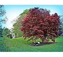 Sketching Under The Red Maple - Grounds for Sculpture Photographic Print