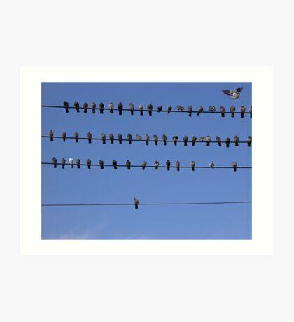 Sorted Pigeons Art Print