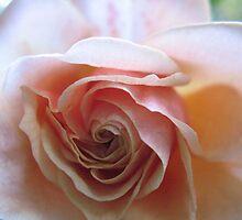 Peach Shnapps Rose by MarianBendeth