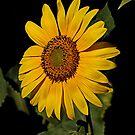 sunny daze by Rodney55