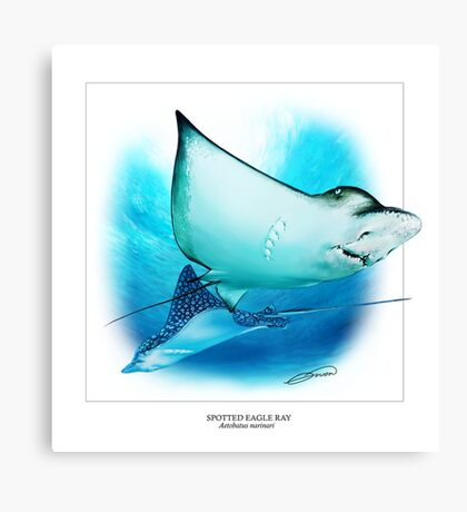 SPOTTED EAGLE RAY 6 Canvas Print