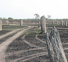Magnetic Termite Mounds by Catherine Clemow