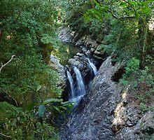 Dorrigo National Park by Ben by Benevolent Society