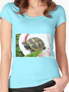 Baby Eastern Hermann's Tortoise at Home Women's Fitted Scoop T-Shirt
