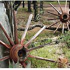 Columboola's Cactus Garden by columboola