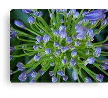 Purple Flower Floral-(Macro) Canvas Print